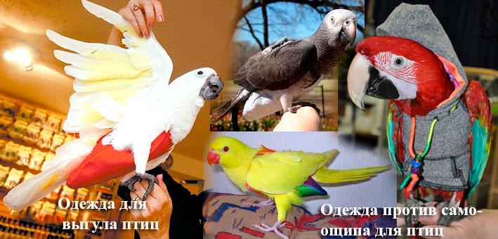 Как сделать воротник для попугаев 9